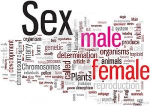 Principales términos relativos a la sexualidad.